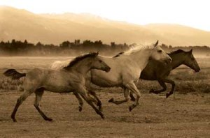 AB6690-Horse-Trio--by-Robert-Dawson---